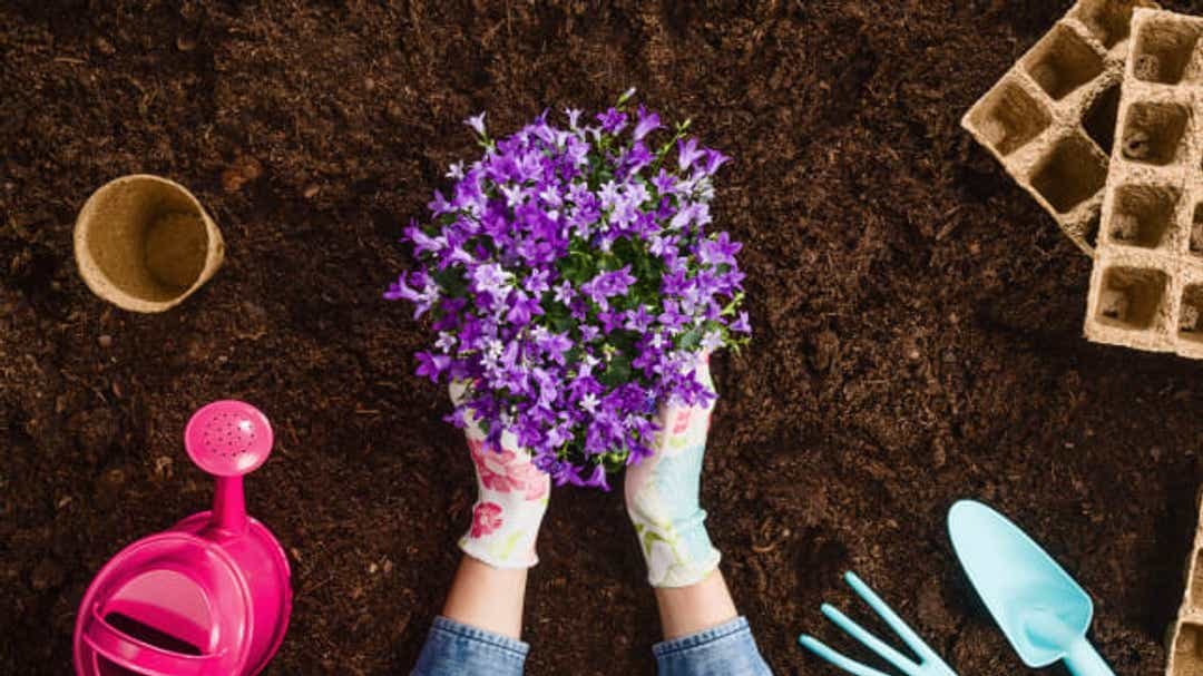 How to indulge your green thumb but control costs