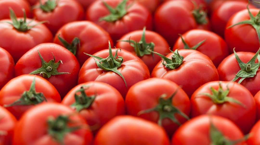U.S. tomato prices expected to increase