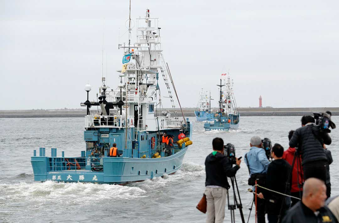 Country resumes commercial whaling culture