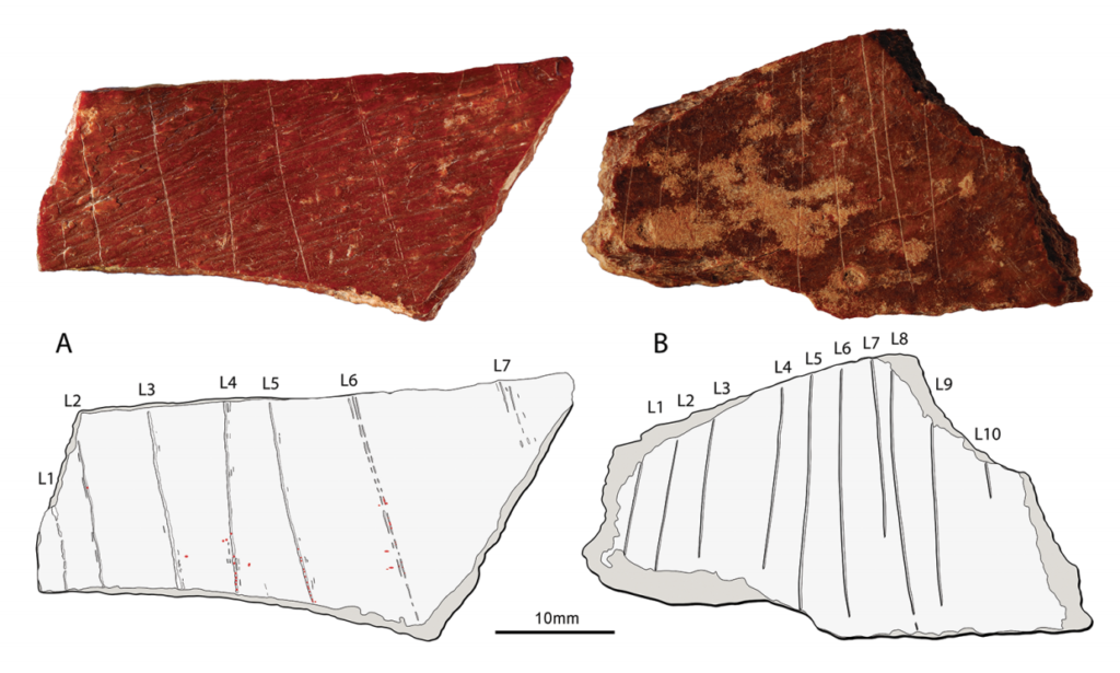 Engraved human bone fragment found in China's Henan Province. Image courtesy of Francesco d'Errico and Luc Doyon.