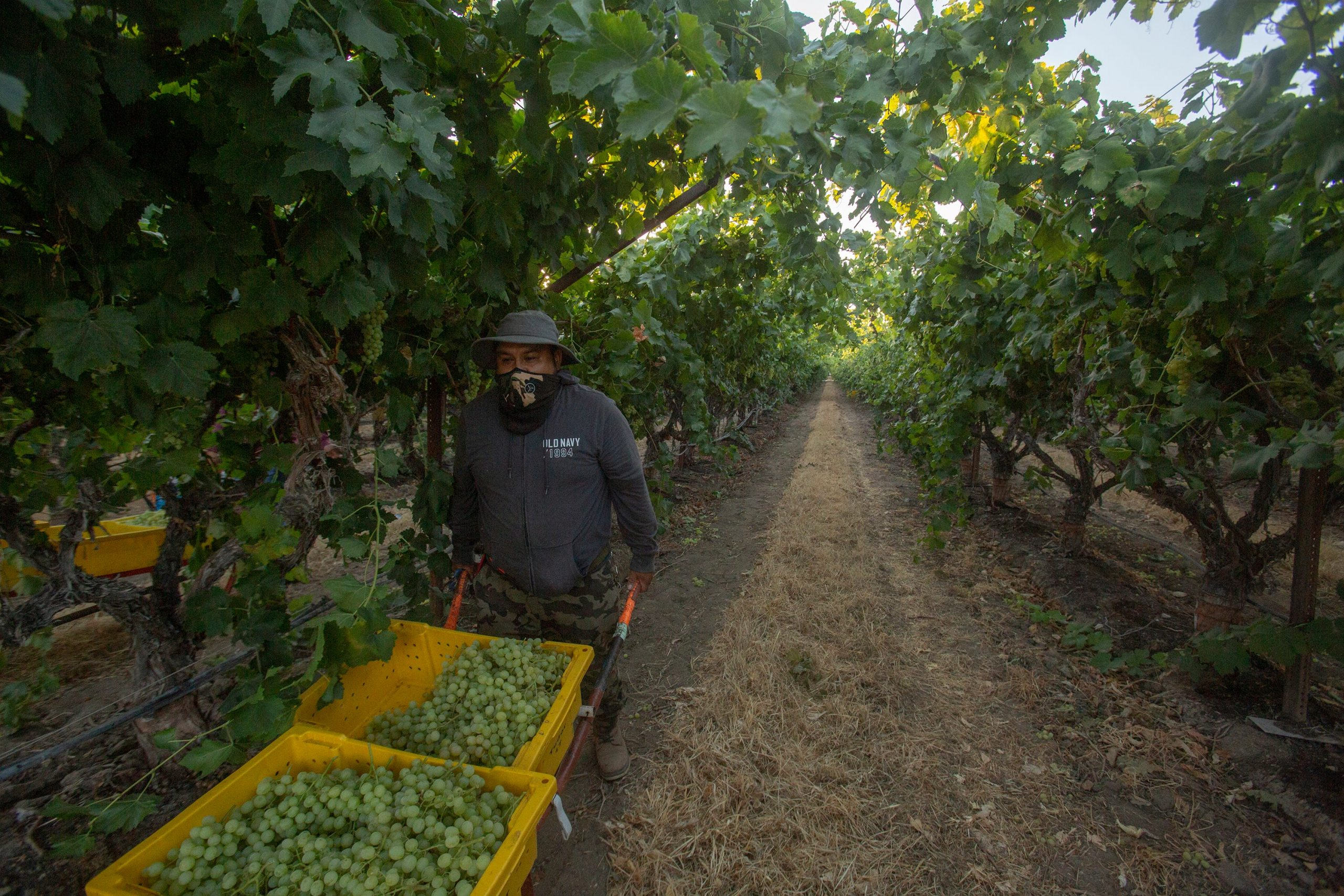 California city OKs controversial 'hero pay' for farmworkers, other essential workers