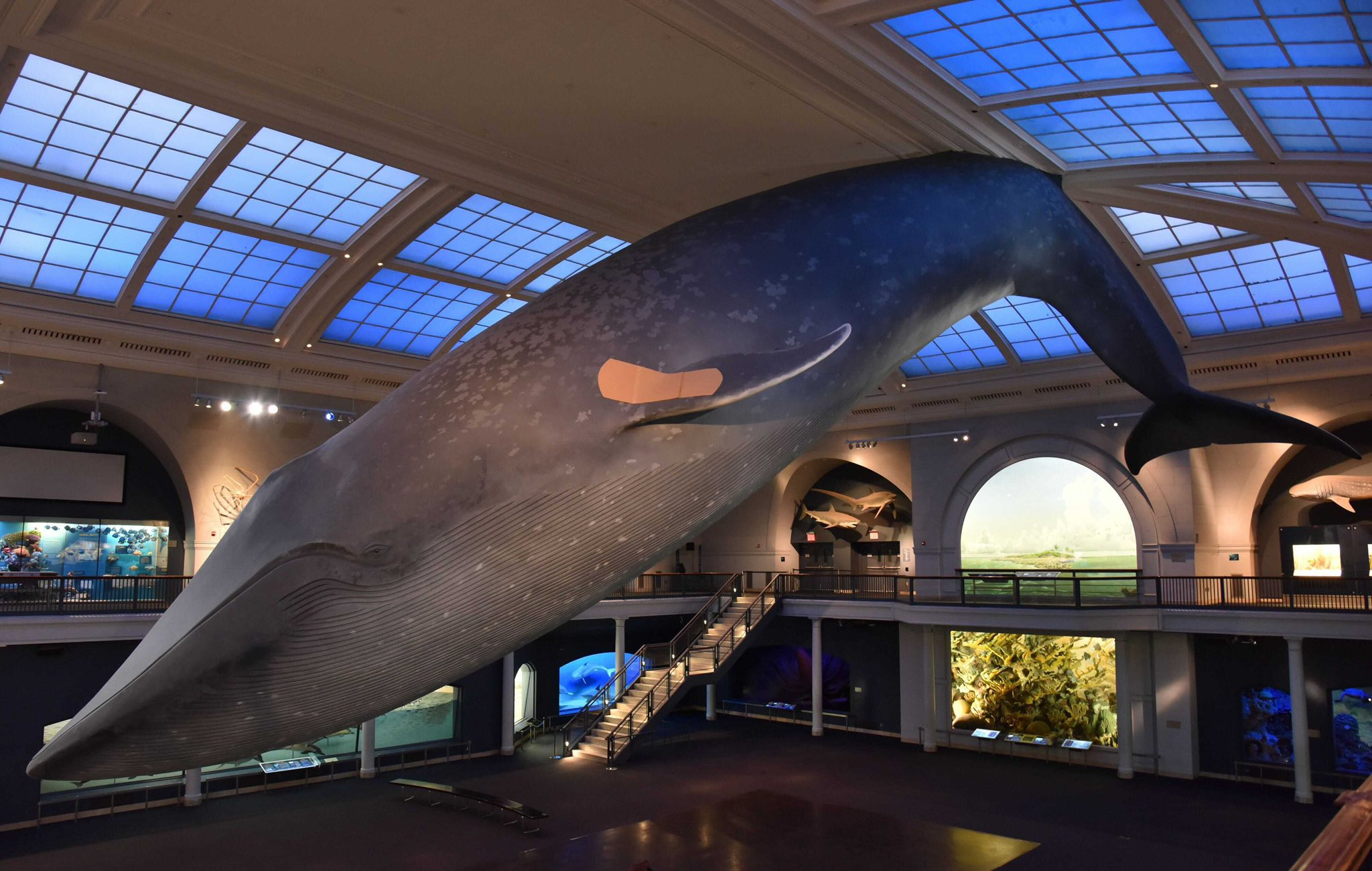 New Yorkers Can Now Get Vaccinated Under the Famous Blue Whale at the American Museum of Natural History | Artnet News