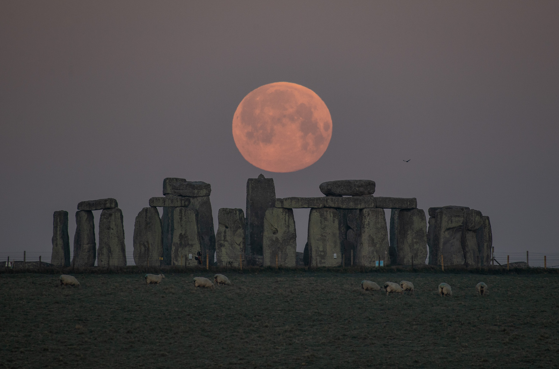 Scientists Have Conducted Tests That Reveal Stonehenge Is Made From a Nearly Indestructible Ancient Material | Artnet News