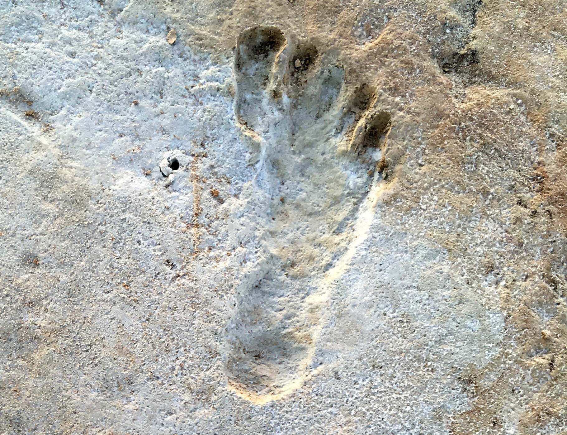The Oldest Human Footprints in North America Could Redefine Prehistory as We Know It—and It's All Thanks to These Tiny Seeds   Artnet News